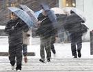 Nhật Bản: 2 người chết, 89 người bị thương vì bão tuyết