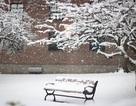 Chùm ảnh bão tuyết lịch sử tại Mỹ qua ghi nhận của du học sinh Việt