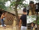 Dân mạng phẫn nộ vì ba thanh niên đánh chó dã man
