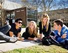 Mời gặp đại diện Đại học Macquarie, Úc: Chất lượng Top- Việc làm Top