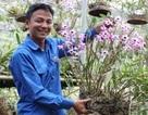 Về núi trồng lan