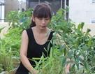 Làm vườn trong nhà trọ