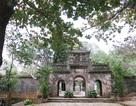 Đà Nẵng có thêm 7 Cây di sản ở danh thắng Ngũ Hành Sơn