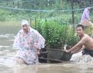 Hàng trăm hộ dân Quảng Ngãi sơ tán vì lũ, một người mất tích