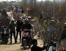 Vườn đào Nhật Tân trở thành chợ hoa cực kì nhộn nhịp
