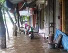 Hình ảnh Thái Bình, Nam Định mênh mông nước