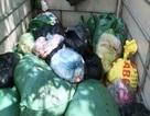 Thu mua 800kg mỡ lợn, bì lợn thối từ các lò mổ gia súc về chế biến tiêu thụ
