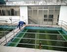 """Dân """"tập"""" dùng nước sạch không đảm bảo vì nước sông ô nhiễm"""
