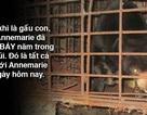 Cứu hộ thành công cá thể gấu chó bị nuôi nhốt 7 năm