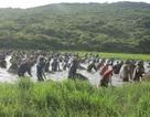 """Hàng trăm người cùng dầm mình dưới nước kiếm cá """"may"""""""