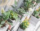 9X cải tạo bãi rác thành vườn hoa giữa lòng Hà Nội