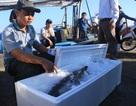 Chuyên gia Nhật khen tay nghề ngư dân Việt Nam