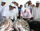 Cá ngừ đại dương bán giá cao nhất 305 ngàn đồng/kg tại Nhật Bản