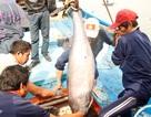 Thương lái ép giá cá ngừ đại dương