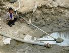 Thủy điện cắt nước, nông dân điêu đứng vì lúa chờ chết
