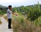 """Bình Định: Dân """"tố"""" phường bao che việc làm đường lấn đất rẫy"""