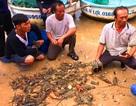Phú Yên: Tôm hùm chết hàng loạt do lũ làm ngọt hóa