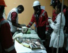 Bé gái Kenya sống sót thần kỳ sau 4 ngày bị vùi trong đống đổ nát