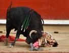 """Tây Ban Nha """"dậy sóng"""" vì nghi lễ giết mẹ bò tót đâm chết đấu sĩ để trả nợ máu"""
