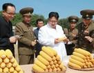 Lãnh đạo Kim Jong-un thị sát hoạt động nông nghiệp tại Triều Tiên