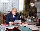 Câu chuyện phía sau những bức chân dung biểu tượng của ông Trump