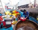 Phổ biến số điện thoại đường dây nóng hỗ trợ ngư dân