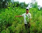 """Quảng Bình: Ưu tiên cán bộ, """"ém"""" tiền dự án hỗ trợ người dân trồng rừng sản xuất"""