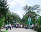 Phong Nha – Kẻ Bàng cam kết không tăng giá vé trong dịp Tết Nguyên đán