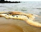 Xác cá voi khoảng 5 tấn dạt vào bờ biển