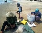 Quảng Bình: Phân bổ  hơn 1.000 tấn gạo hỗ trợ ngư dân