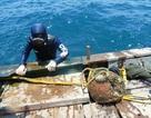 Theo chân thợ lặn tìm kiếm hải sản chết dưới đáy biển