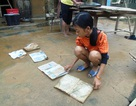 Quảng Bình: Miễn học phí 5 năm cho học sinh vùng lũ có hoàn cảnh khó khăn