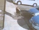 Chú chó thiệt mạng khi dũng cảm đỡ đạn cứu chủ