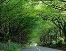 """""""Ngất ngây"""" bước đi trên những con đường đẹp nhất thế giới"""