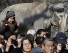 """Người Nhật gấp rút """"giải cứu"""" con voi buồn bã nhất thế giới"""