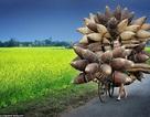 Nhiếp ảnh gia Việt Nam được khen ngợi tại cuộc thi nhiếp ảnh quốc tế