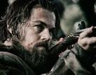 """Phim dẫn đầu đề cử tại giải Oscar bị tố là phim… """"làm lại"""""""