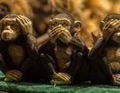 """Triết lý sâu sắc đằng sau 3 chú khỉ """"che mắt, che tai, che miệng"""""""