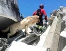 Câu chuyện về chú chó cứu hộ qua đời sau khi cứu được 7 người