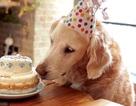 Những chú chó cứu hộ khiến cộng đồng mạng cảm động trong năm 2016