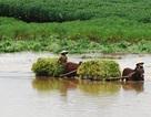 Nghệ An: 5 xã với hơn 10 ngàn dân đang bị cô lập vì mưa lũ