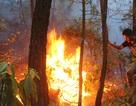 Người dân nỗ lực cứu 5ha rừng thông bị cháy