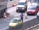 """Hà Nội: Hơn chục con lợn đi lại """"nghênh ngang"""", đường trên cao ùn tắc kéo dài"""