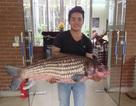 """Cá Hô """"khủng"""" quý hiếm từ Tây Nguyên ra Hà Nội"""