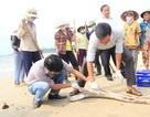 Xác định vùng khai thác và giám sát hải sản an toàn ở miền Trung