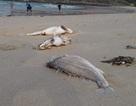 Buộc tiêu hủy đối với hải sản khai thác không an toàn