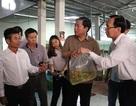 Bộ trưởng Phát phản hồi về xuất khẩu cá cảnh ở TP HCM