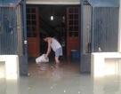 Giáo sư hiến kế giúp Hà Nội thoát cảnh hễ mưa là ngập