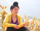 """Ngô biến đổi gen tạo """"cú hích"""" cho nông nghiệp Sơn La"""