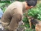 Dùng chó nghiệp vụ săn chuột cống, kiếm bạc triệu mỗi ngày